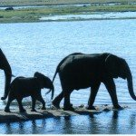 elephants to water